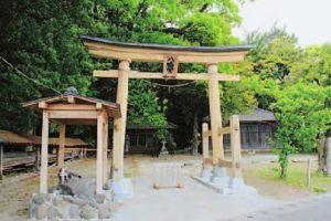 八幡神社のイスノキ