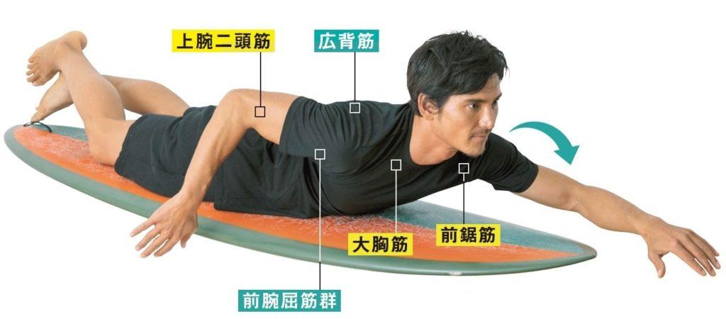 パドリングで使う筋肉